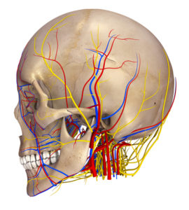 persistent idiopathic facial pain